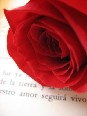 Mi Rosa por tu Libro